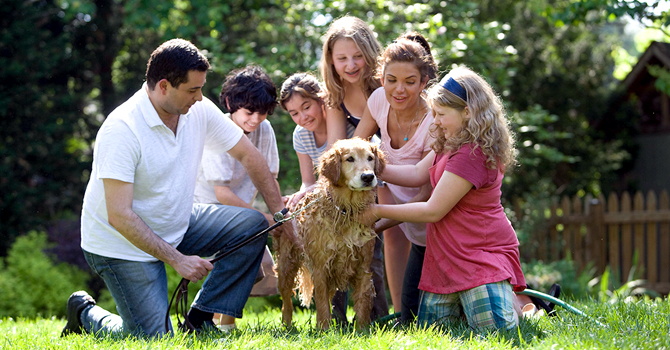 Family and friends washing a dog