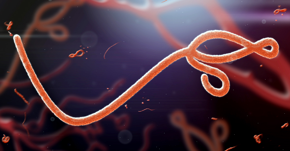 Microscopic image of Ebola virus